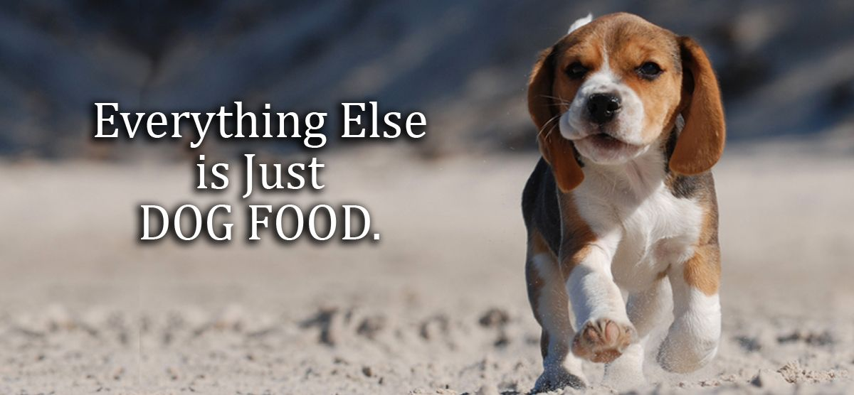 everything for your dog