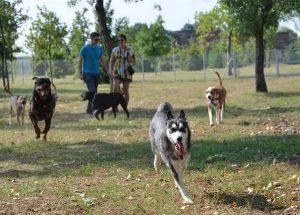 כלבים משחקים בגינת כלבים