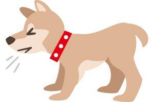 כלבים היפואלרגנים