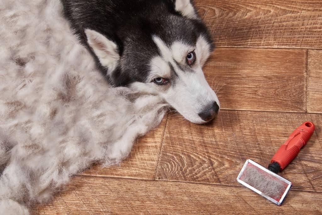 לסרק את הכלב
