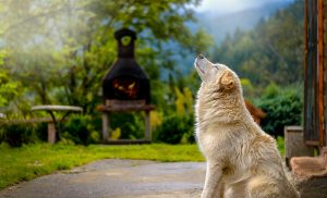 כלב בחצר בית