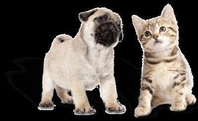 puppy_kitten 2